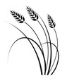 wheat in the wind vector image vector image