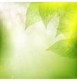 Background of green leaves EPS 10 vector image