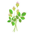 four rose buds vector image