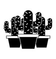 three potted cactus plant natural vector image