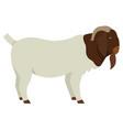 farming today boer goat buck vector image vector image