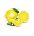 lemon realistic composition vector image vector image