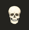 realistic skull with the color of the bone on vector image vector image