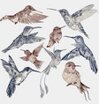 set of detailed hand drawn birds for design vector image vector image