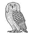 funny eared owl fairytale bird animal sketch vector image vector image
