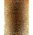 leopard spotted fur pattern vector image vector image