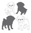 set of images of pug isolated objects on a white vector image
