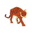 tiger walking wild cat predator cartoon vector image