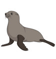 color with fur seal vector image