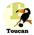 ABC Cartoon Toucan vector image vector image