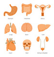 human internal organs objects icons set vector image vector image
