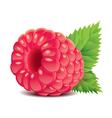 object raspberry vector image