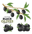 Olives with leaves vector image vector image