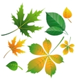 set of leaves on white vector image