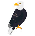 big black eagle in the wild life flat animal vector image