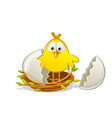 cute newborn chick in a nest twigs broken egg vector image vector image
