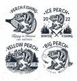 eurasian river perch fishyellow perch fishing vector image vector image