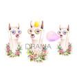 llama drama queen and no problem design collection vector image