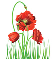 Poppy with Grass2 vector image vector image