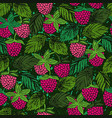 seamless pattern with raspberries ink hand drawn vector image