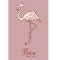 elegant flamingo vector image