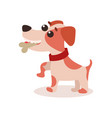 jack russell terrier character eating bone cute vector image