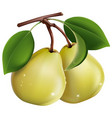 two pears on a white vector image vector image
