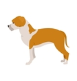 American staffordshire terrier vector image vector image