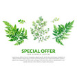 big summer banner with green forest ferns vector image vector image