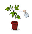 care for indoor plants watering flowers vector image