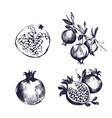 pomegranate hand drawn set collection on white vector image vector image