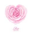 rose flower in heart shape vector image