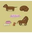 Set of cute dachshund in different vector image vector image