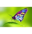 The cute colored butterfly on the grass vector image