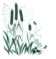 wild grasses vector image vector image