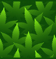 marijuana leaves seamless pattern bright green vector image