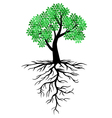 tree root vector image vector image