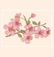 vintage postcard with sakura vector image