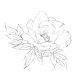 ink painting peony isolated on white vector image vector image