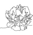 peony flower close-up minimalist vector image