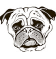 pug muzzle black isolated vector image vector image