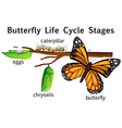 Butterfly life cycle stages vector image vector image