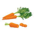 carrot ripe carrot vegetable vector image