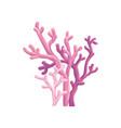 coral aquatic marine plant vector image