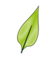 leave plant and nature element ecology vector image vector image