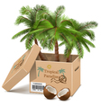 Palm Tree in Box vector image vector image