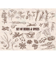 Set of Herbs and spices in sketch style vector image