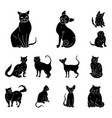 breeds of cats black icons in set collection for vector image vector image