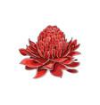cartoon halftone with etlingera elatior flower vector image