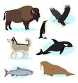set of cute wild animals icon for design vector image vector image